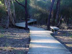 Bellbird Dell Boardwalk