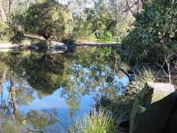 Bellbird Dell Pond