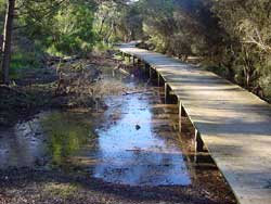 Bellbird Dell Wetland Boardwalk